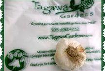 The Stinking Rose /  25 Varieties for Ga Ga for Garlic