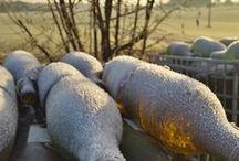 [#LoireHiver] Les meilleures photos du Concours Loire Hiver / Elle est pas belle la vallée de la Loire l'hiver ? Retrouvez ici les meilleures photos du Concours Loire Hiver qui s'achève le 17 février 2015. Quelle est votre préférée ?  Retrouvez toute l'histoire sur notre Storify https://storify.com/vinsvaldeloire/loirehiver