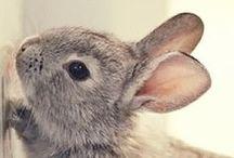 ♥♥Adorable Animals♥♥