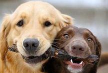 Pet Social Board / La fedeltà di un cane ci insegna che l'amicizia può durare per sempre... [Lasse Hallström]  --- Invite your friends to pin on this board!  --- Ask to be added on this board: send a comment with request under the picture!