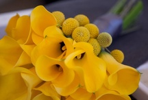 Yellow Bouquets / Yellow Bride and Bridesmaids bouquets