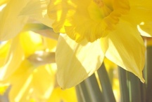 ~ Color Of Sunshine ... / all things yellow ... / by Rita Phillips