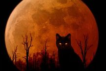 ~ All Hallow's Eve ... / all things Halloween / by Rita Phillips