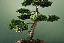~ Art of Bonsai  ... / display of Bonsai trees... / by Rita Phillips