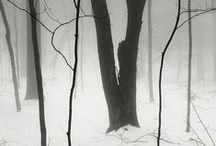 A Walk in the Woods / by Kris C.