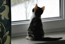 Cats in windows / Do not be surprised at finding a cat at the window. If they are outside, they will want to come in. If they are inside, they long to go outside. / by Kris C.