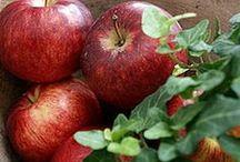 ~ Apple of my Eye ... / by Rita Phillips