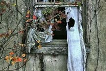 Abandoned / Past their prime / by Kris C.
