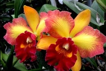 Orchids Too