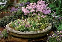 ~ Container Gardens . . . / Container garden ideas / by Rita Phillips