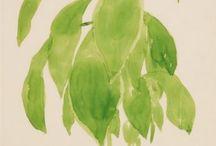 Plants / Plantas