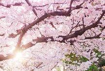 Spring in Japan / by Morikami Museum