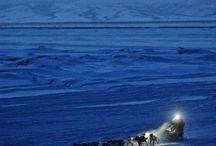 ADVENTURE: sled dogs & mushing