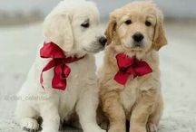 It's a Dogs World / Love the puppies. Our best friends.