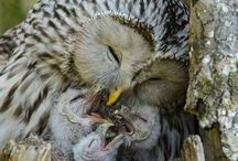Owls / So many beautiful owls in the world. They are awesome.
