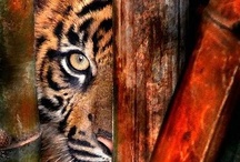 Amazing Animals / What a zoo out there!