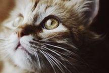 ...cat love...
