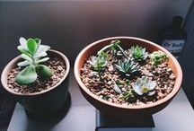 I love plants / Leafy, green, cactus, succulent, flowered, indoor, outdoor, big, small, create neature.