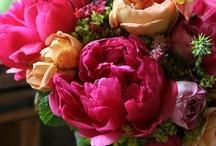 Flowers & Gardens / by s kokeshi