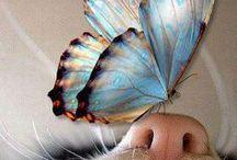 Butterflies & Moths & Dragonflies / by s kokeshi
