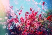 Plants / by Sarma Krumins