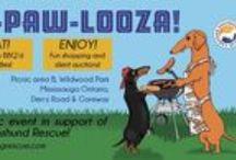 Wiener-Paw-Looza - September 21 2013