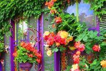 Gorgeous gardens / by Brandi LaPointe