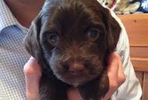 Puppy Love / by Mandy R. Baldree