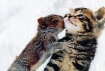 Best Friends / Great images of animals best friends.