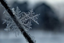 Frozen perfection / by Robin Patterson