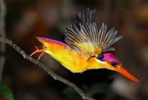 Ornithology / The study of birds.....