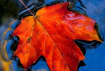Autumn / All about autumn! Photography to the best places to see such beauty and color.