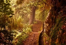 Path to...... / by Robin Patterson
