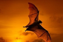 Dragons / All about Dragons