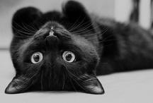 Black Cats! / I love black cats, they and all kitties are too cute for words!