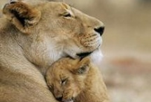 Mother's love / by Robin Patterson