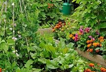 Garden, fruit/vegetable / by Jennifer Zigan