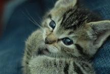 cute / by Brooke Taylor