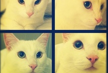 I'm not a crazy cat lady... yet. / by Lea Fabryk