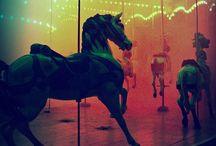 Horses / Equestrian Life