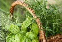 Herbs / by Heidi Engler