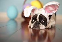 Easter / by Heidi Engler