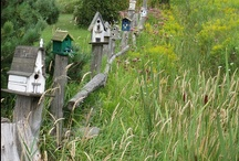 Garden : Birdhouses | Birdfeeders