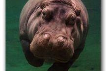::HIP HOP ANONYMOUS?:: / Hippos.