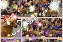 Collages / Collages from work and clients / by Az Pet Professionals