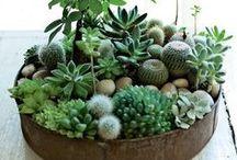 Mini Jardins Suculentas