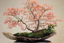 Bonsai - A Arte