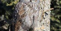 Owls | Совы