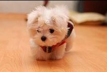 sweet puppies <3