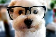 Cuteness / The cutest animals!